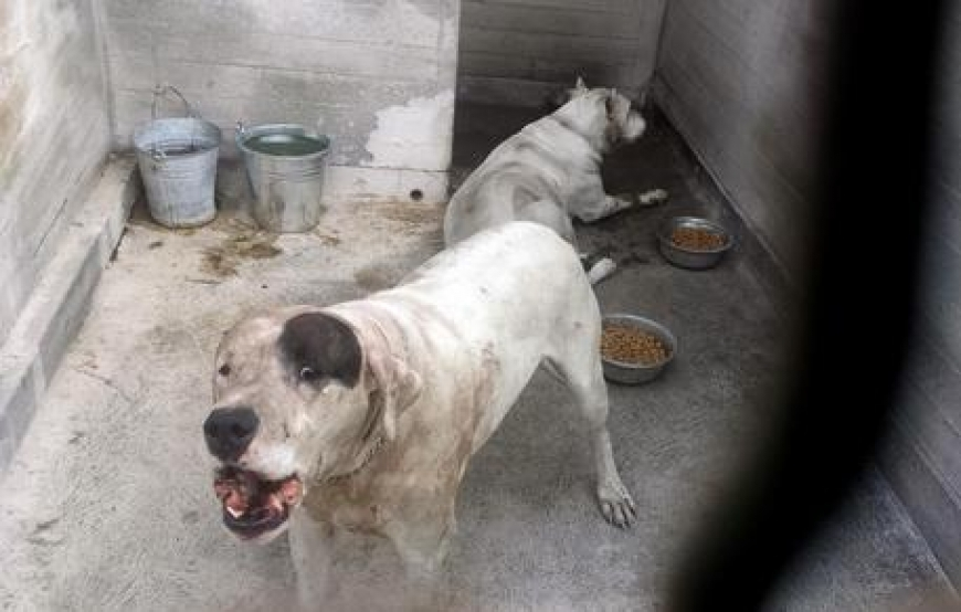 Battipaglia, anziano sbranato e ucciso dai suoi due cani